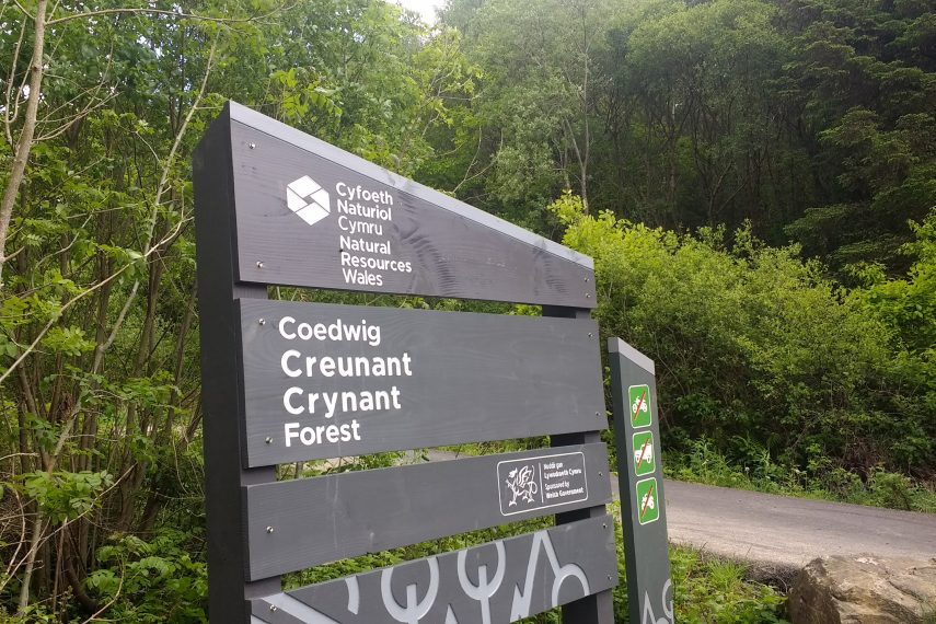 Crynant forest