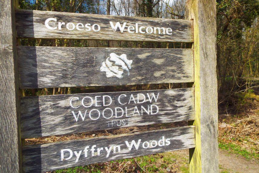 Dyffryn Woods