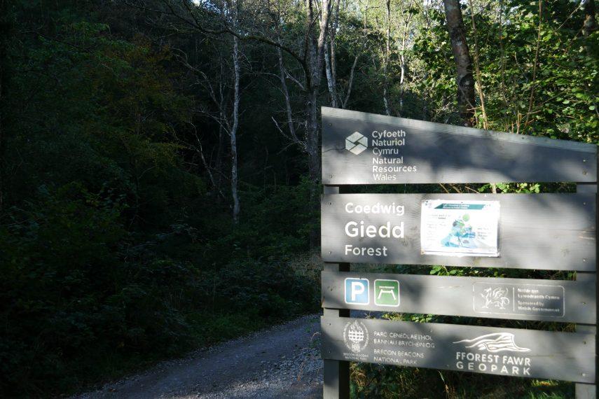 Cwm Giedd Forest